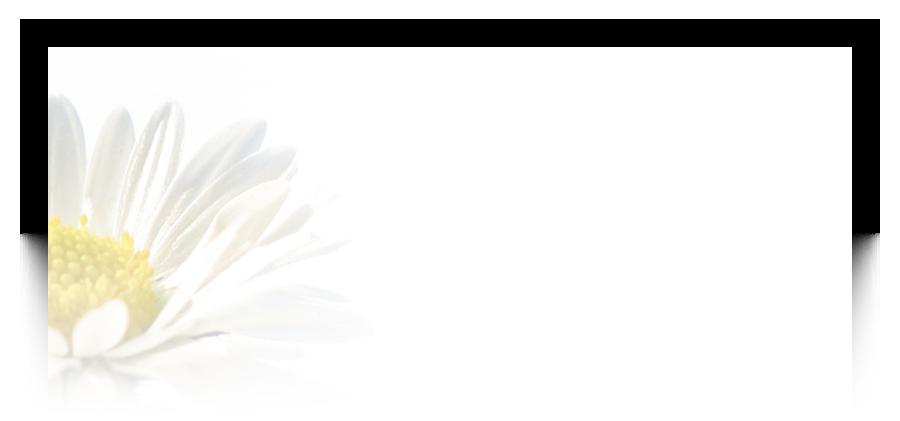 Rouwkaarten laten drukken met voorbeelden van bloemen, calla lily, gerbera, hyacint, roos, tulp, lilly, bloem